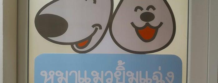 โรงพยาบาลสัตว์หมาแมวยิ้มแฉ่ง is one of Dogs.