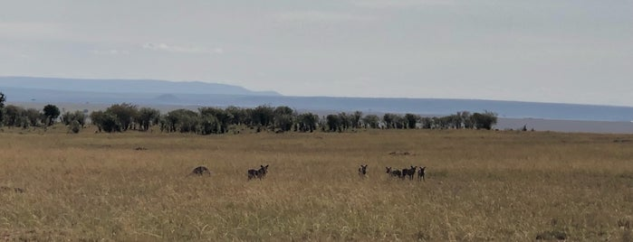 Maasai Mara National Reserve is one of Aaron : понравившиеся места.