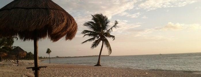 Pavo Real Beach Resort is one of Lugares favoritos de Allan.