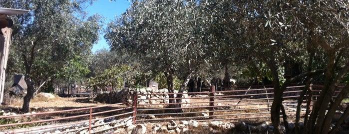 חוות יערן is one of Locais curtidos por MaMa Roma.