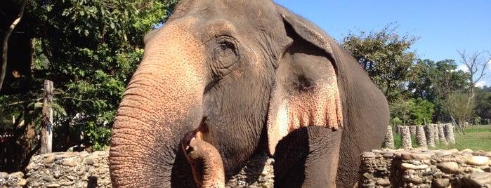 Elephant Nature Park is one of Locais curtidos por Analucia.