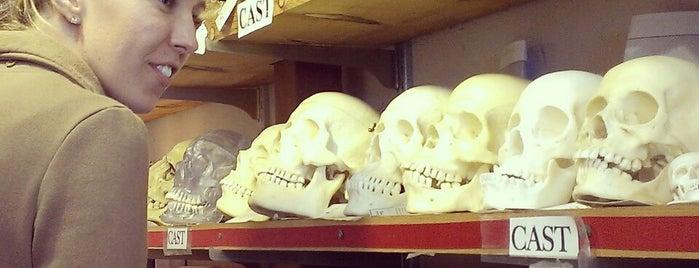 The Bone Room is one of Oddities.