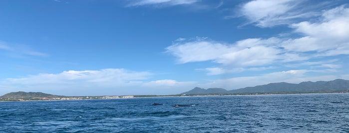 Punta de Mita is one of Locais curtidos por Pablo.