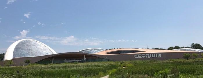 Ecorium is one of 서천.
