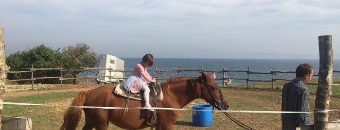 Eagle Horses Ranch is one of Posti che sono piaciuti a Sinan.