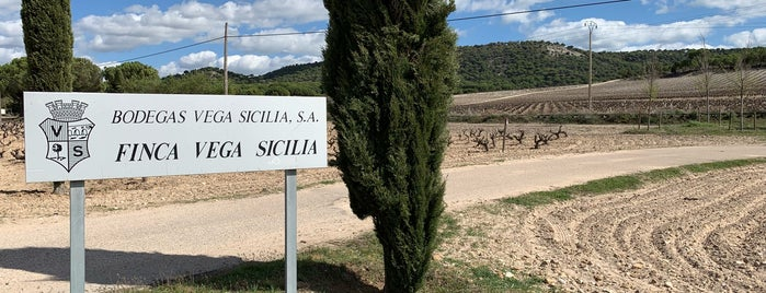 Bodegas Vega Sicilia is one of Wine World.