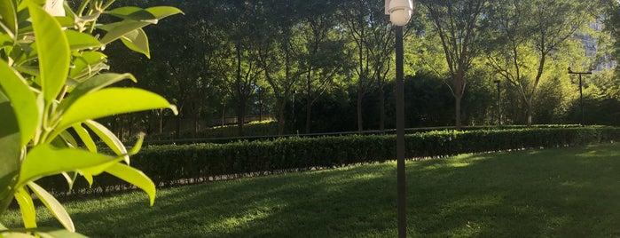 Central Park is one of Lieux qui ont plu à Seba.