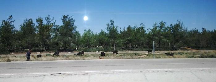 Adana - Kozan Yolu is one of Ali'nin Beğendiği Mekanlar.