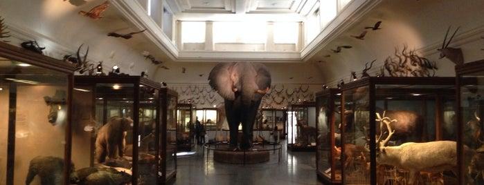 Göteborgs Naturhistoriska Museum is one of Lieux qui ont plu à H.