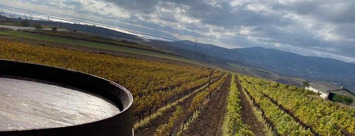 barbare tekirdağ şarap ewi is one of Gülçem'in Kaydettiği Mekanlar.