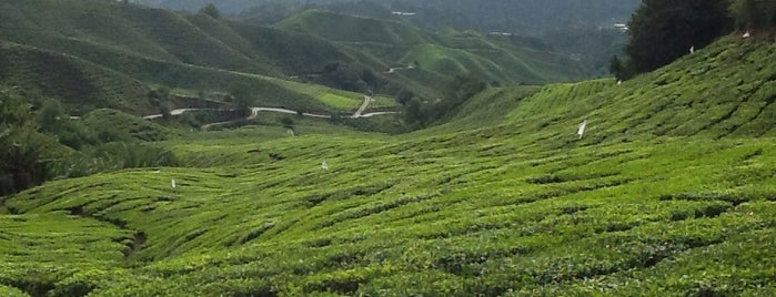 Cameron Highlands is one of malaysia/KL.