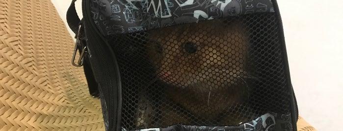 Phuket Animal Quarantine Station is one of Phuket.