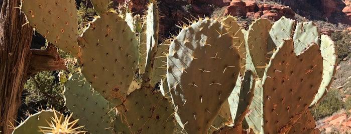 Fay Canyon Trailhead is one of Arizona.