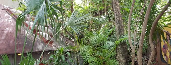 El Jardin is one of Mexico! Traigame El Pulque!.