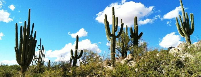 Catalina State Park is one of Arizona Adventures.