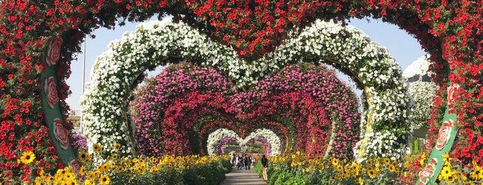 Dubai Miracle Garden is one of Tempat yang Disukai Jus.