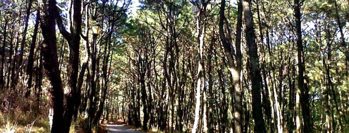 Bosque Los Colomos is one of Locais curtidos por Cristina.