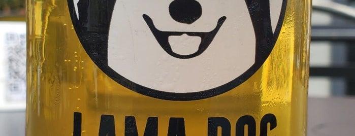 Lama Dog Tap Room is one of Brandon // Santa Barbara.