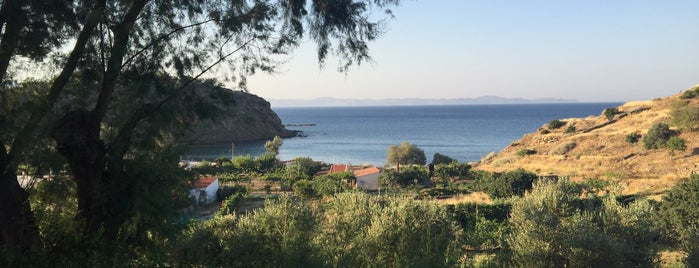 Zorbas is one of Chios Island.