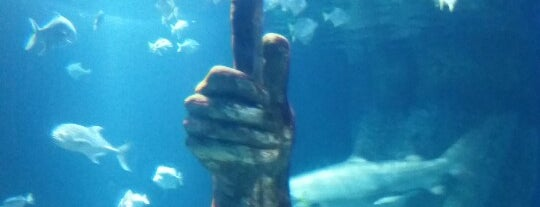 Long Island Aquarium & Exhibition Center (Atlantis Marine World) is one of สถานที่ที่ Lyn ถูกใจ.
