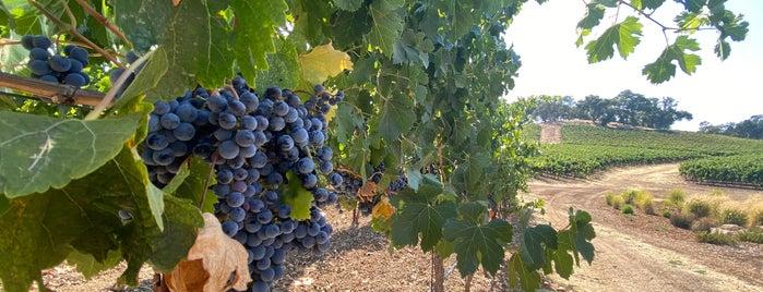 Justin Vineyards & Winery is one of st 님이 좋아한 장소.