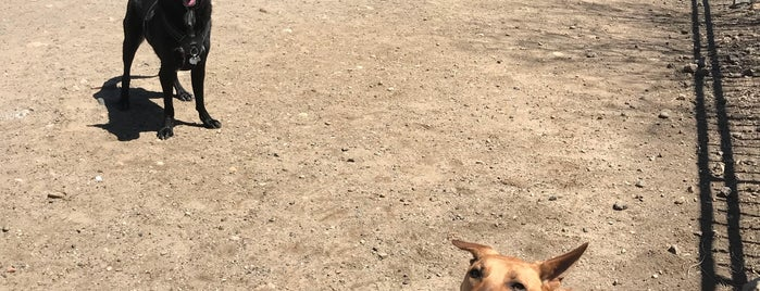 Murray Dog Run is one of My Good Dog NYC: NYC Dog Runs.