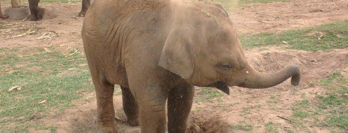 Elephant Nature Park is one of Locais curtidos por Jesse.