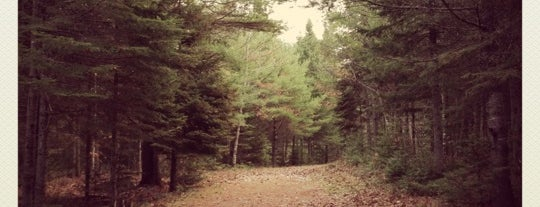 Bangor City Forest is one of Dana 님이 좋아한 장소.