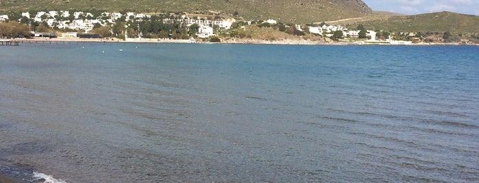 Okaliptus Beach Akyarlar is one of Orte, die Gamze gefallen.