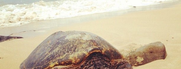 Laniakea (Turtle) Beach is one of Favorite Local Kine Hawaii.