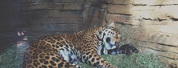 Jaguar Exhibit is one of Orte, die Omkar gefallen.