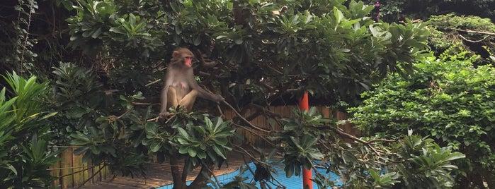 Monkey Island is one of Lieux qui ont plu à Andrea.