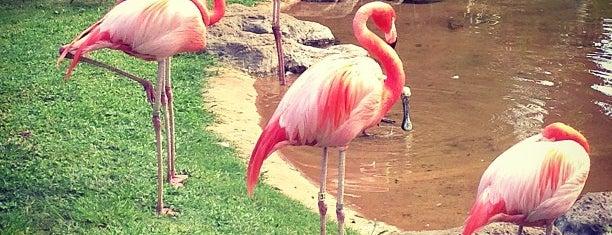 Honolulu Zoo is one of Honolulu.