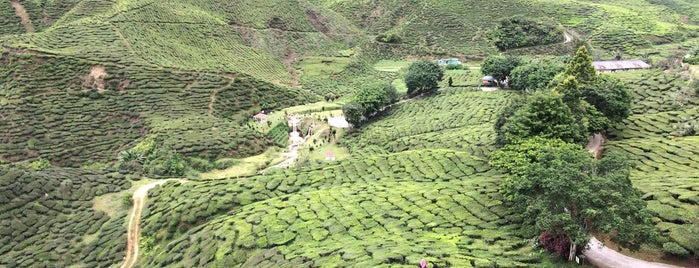 Cameron Valley Tea Plantations is one of malaysia/KL.