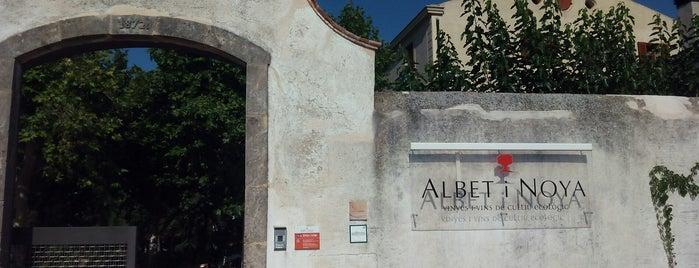 Albet i Noya is one of Bodegas.