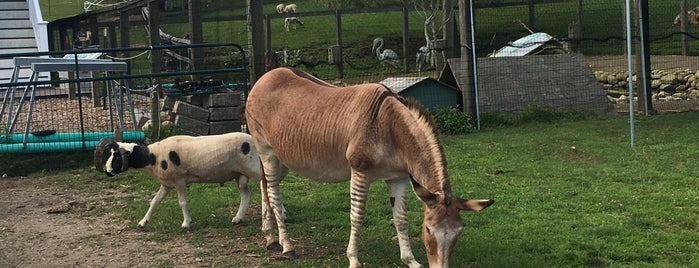 Animal Farm is one of Lieux qui ont plu à Bianca.