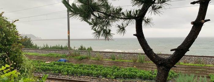 하평해변 is one of 동해.