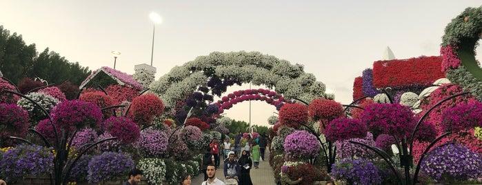 Dubai Miracle Garden is one of สถานที่ที่ Alfredo ถูกใจ.