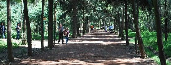Viveros de Coyoacán is one of Los mejores lugares para correr en el DF.