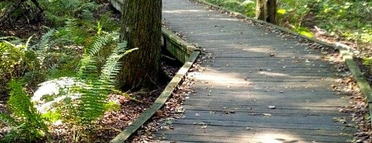 The Bog Boardwalk is one of Deborah 님이 저장한 장소.