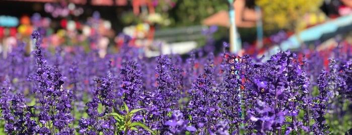 Poinsettia Garden Phurua is one of เลย, หนองบัวลำภู, อุดร, หนองคาย.