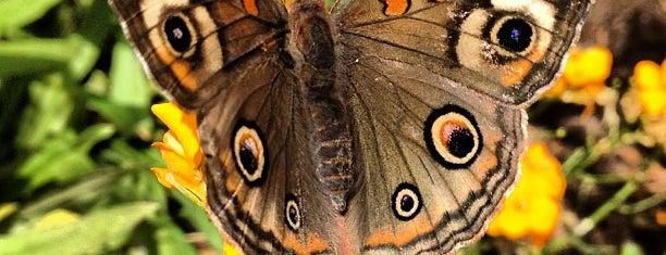 Tinker Bell's Butterfly House is one of Epcot International Flower & Garden Festival.