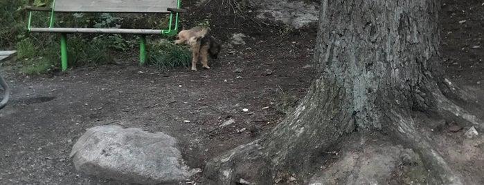 Hundrastgården Sjöviksbacken is one of Stockholm dogs.