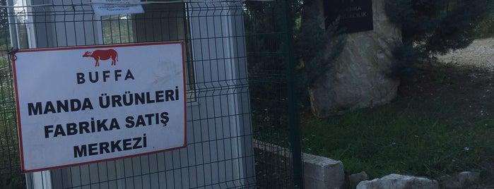 Buffa Çiftliği is one of Sıra dışı yeme içme mekânları.