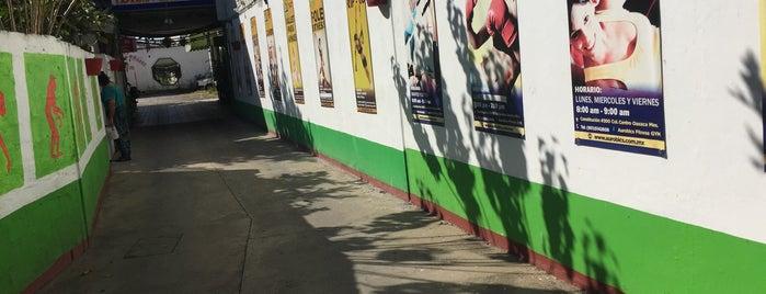 Aurobic's Fitness GYM is one of Oaxaca.