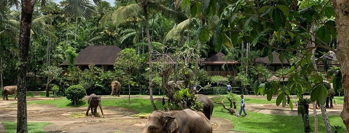 Elephant Safari Park & Lodge Taro Ubud is one of Bali.