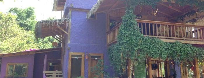 El abrazo del árbol is one of Ecuador.