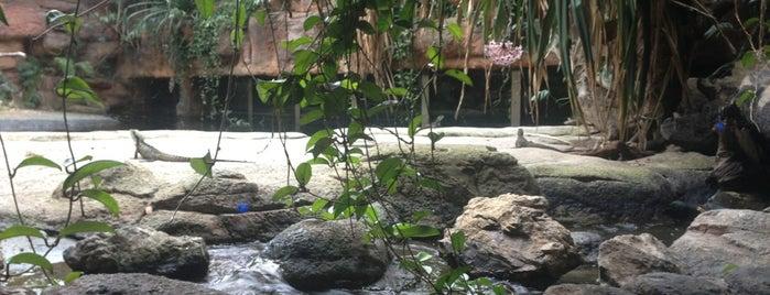 WILD LIFE Sydney Zoo is one of Australia.