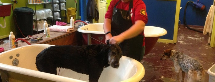 The Soapy Dog is one of Dog Store/Pet Store.
