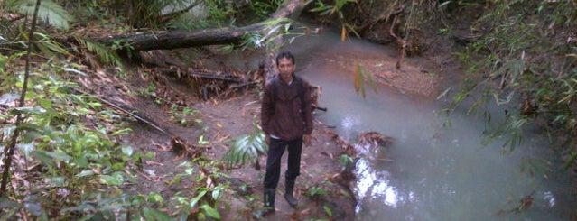 Alas Purwo National Park is one of Java / Indonesien.